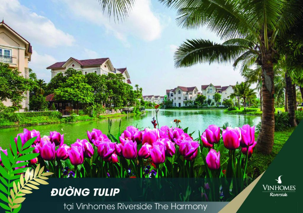 vinhomes-riverside-the-harmony-tulip-1